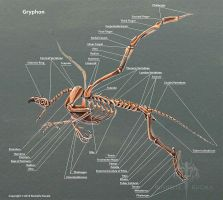 Gryphon Skeleton Anatomy by TheDragonofDoom