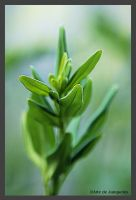 New Growth for a new year by Arte-de-Junqueiro