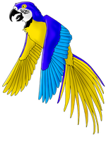 Hyacinthine Blue and Gold Macaw by terceleto