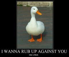 Duck Demotivational picture by Omega208