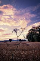 Wheat Field at Sunset by Gerard1972