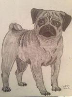 Pug by KillerWolfPack