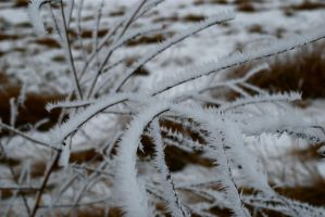 Frosted Mini-Weeds by MNgreen