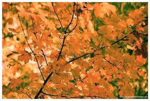 Autumn Symphony by Iulian-dA-gallery