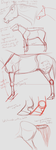 dingo's horse anatomy rules (it does) by DingoMutt