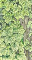 004-052 - IVY by sweetmarly