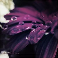 One drop by illusionality