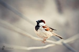 Sparrow Moment by fahadee