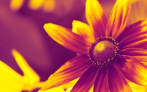 Yellow vs Purple by miroslav-petrinec