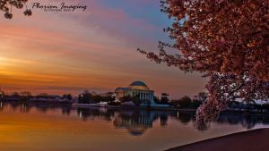 cherry blossom dawn by PhorionImaging