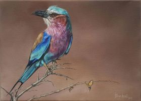 Lilac-breasted Roller by robynansellart