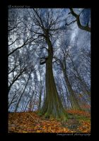 Enchanted Tree by lowapproach