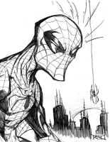 Morning Sketch - Spiderman 01 by RobDuenas