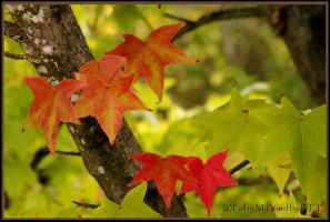 Fall in my yard by kayaksailor