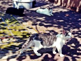 cats by BUBIMIR-39