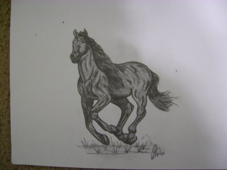 Another Horse Drawing by celticmaiden7