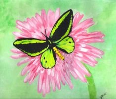 Green Butterfly by lettym