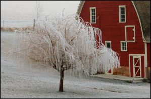Ice Tree by wallawallabigguy