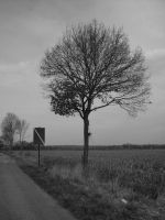 gray tree by konfuse