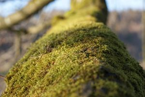 Moss 1 by Stichflamme-Stock