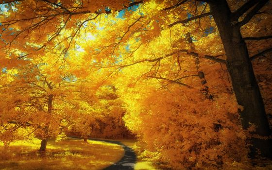 Yellow Trees Part IV by myINQI