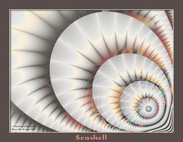 Seashell by rocamiadesign