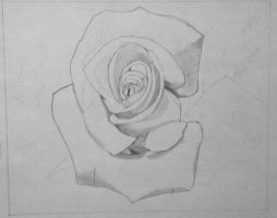 WIP2:  Rose in Graphite Pencil 11/29/2012 by ChrisDutton