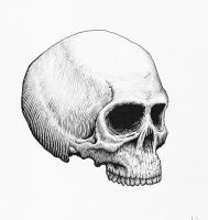 Anatomical Skull Ink Drawing by Hipsterscon