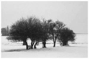Lonesome trees covered in snow by retsbom