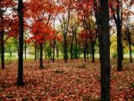 Season Of The Fall by AlexandrinaAna