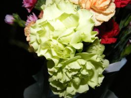 My Beautiful Carnations by BlueIvyViolet