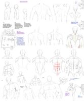 Male torso, back by Precia-T