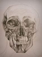 Skull by tracemyheart
