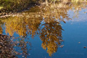 Pure Reflection by melly4260