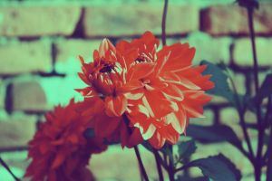 Red flower 2 by Emiliee91