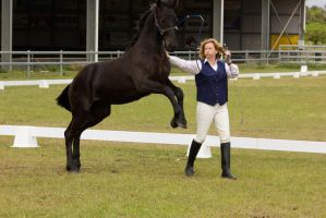 STOCK - Friesian Show 2012-6 by fillyrox