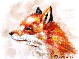 Fox ~ by Gravom
