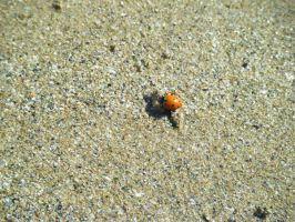 A baby sea ladybird by BeautifulLie89