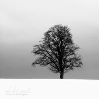the last maple by guality