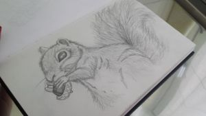 sketch 1- Cute squirrel by niqitaMonster