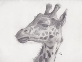 Simply Giraffe by TheRoddler