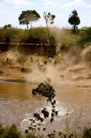 Wildebeest Crossing by porpierita