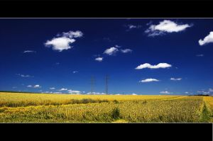 Field in the summer.. by Roman89