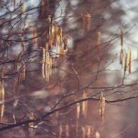 twigs by cloe-patra