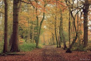 Autumn in Whippendell . by 999999999a