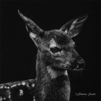 New Life - scratchboard by ShaleseSands