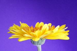 Yellow by onelook