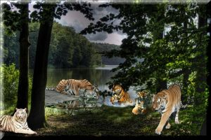 Realm of the Tigers. by Villenueve