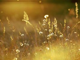 Fields Of Gold II. by Blutr0t