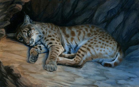 Bobcat by hibbary